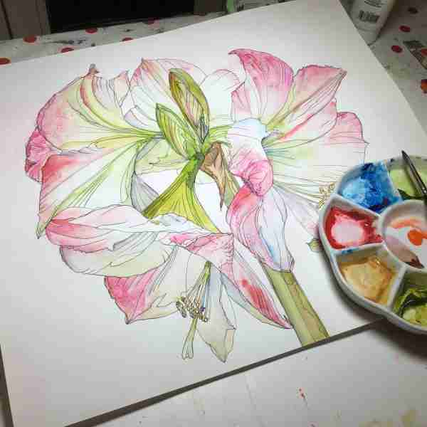 painting_amaryllis_in-watercolour