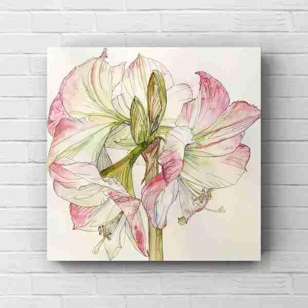 pink_amaryllis_flower_on_white_wall